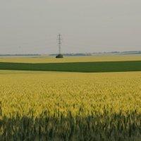 Пшеница ,зигзаги и ...столб... :: Ксения Довгопол