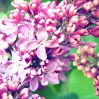 Весна. :: Ксюша MF