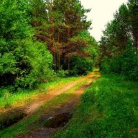 Дорога в лесу. :: Милла Корн