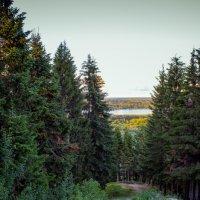 В лес :: Сергей Щеглов