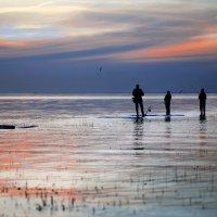 Белые ночи на заливе :: Екатерина Постонен