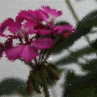 Цветок :: Кира К