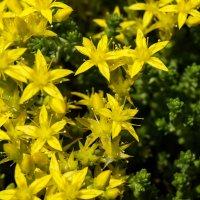 жёлтый мох :: Виктория грёZы