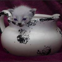 Джины и такие бывают-из серии Кошки очарование мое! :: Shmual Hava Retro