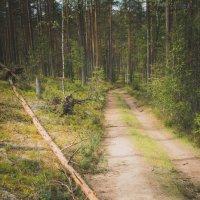 Лесной дизайн :: Михаил Кучеров