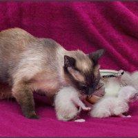 Всё, конец безобразию, мамка пришла-из серии Кошки очарование мое! :: Shmual Hava Retro