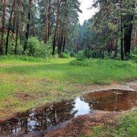 В зеркале прошедшего дождя... :: Лесо-Вед (Баранов)