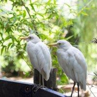 птицы белые :: Александр Деревяшкин