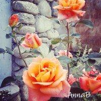 Розы :: Анна Y-Blare