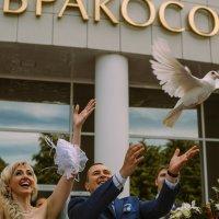 птица счастья :: Катерина Орлова