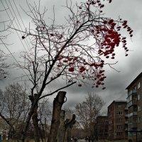 Рябина :: Nn semonov_nn