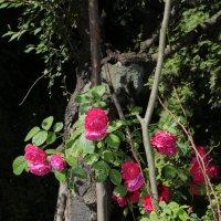 Цветочный хоровод-164. :: Руслан Грицунь
