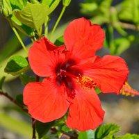 южный цветок :: Наталия Григорьева