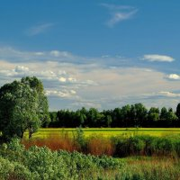 Летний пейзаж :: Юрий Анипов
