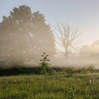 Туманным утром :: Виктор Позняков