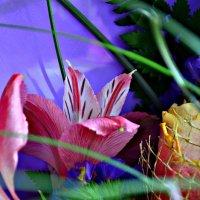 цветок :: Наталия Бабкова