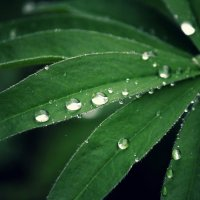 после дождя :: Tasha