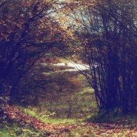 Лесные врата :: Виктор Фин