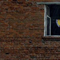 ...стена, окно, дождь... :: Ольга Нарышкова