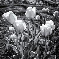 Весенние цветы :: Виктор Кудрявец