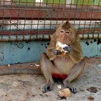 А я не только бананы ем!... :: Виктор Льготин