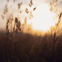 На закате жаркого дня :: Victor Okhrimets
