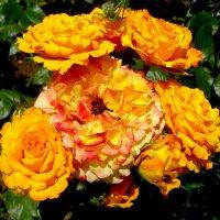 Пламенные розы с сюрпризом... :: Тамара (st.tamara)