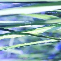 Сон-трава :: Инна Малявина