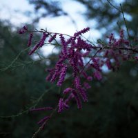 Цветы :: Mishanya Moskovkin
