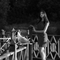 Разговор с любопытной чайкой :: Катрина Деревеницкая