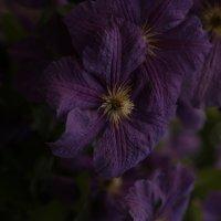 Цветочный хоровод-175. :: Руслан Грицунь
