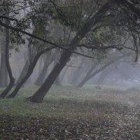 Туманная осень. :: Артур Ходос