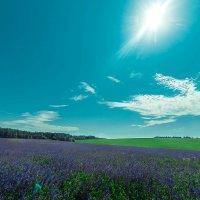 Солнечный день :: Стас Кашин