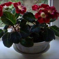На подоконнике стоит глоксиния в кокетливых веснушках... :: Нина Корешкова
