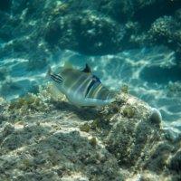 Рыба Пикассо :: Андрей Кулаков