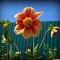 Городские цветы-5 :: Андрей Заломленков