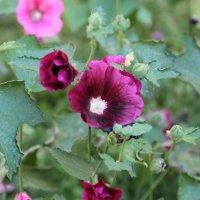 Цветочный хоровод-176. :: Руслан Грицунь