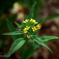 цветы :: Dashiki