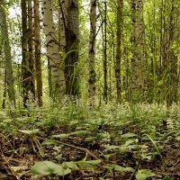 в лесу :: Елена Третьякова
