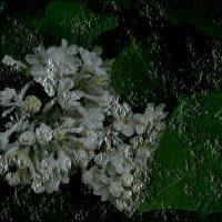 Застывшая гроздь :: Нина Корешкова