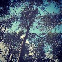 Взгляд в высоту :: Диана Токарева