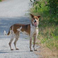 Счастливый пес. :: Тамара Листопад