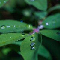 После дождя :: Фотостудия Объективность