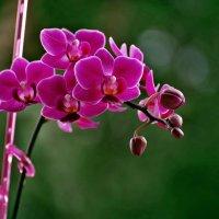 Зимой и летом одним цветом... :: Александр Резуненко