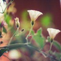 Светильнички лета :: Ирина Сивовол