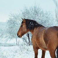 Лошадь-Полночь :: Настя Емельянцева