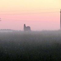 Ночной туман :: Юлия Лохова