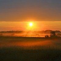 Солнце взошло :: Наталья Левина