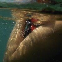 под водой :: Александр
