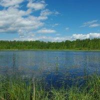 Галкинское болото :: Алена и Денис Щитовы